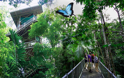 Daintree Rainforest Tours - Daintree Discovery Centre