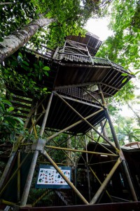 Daintree Discovery Centre Canopy Tower