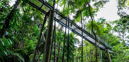 Daintree Discovery Centre Walkway