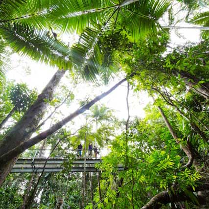 Daintree Discovery Centre Aerial Walkway & Daintree Rainforest Aerial Walkway - Daintree Discovery Centre